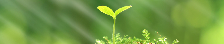 sustentabilidade-ambiental